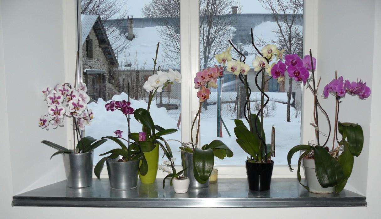 Menuiserie zinc zinc decoratif realisation en cuivre - Come curare un orchidea in casa ...